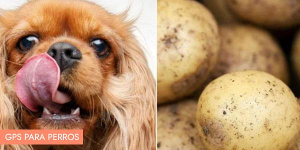 pueden los perros comer patatas
